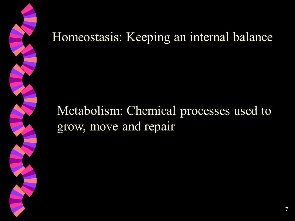 Homeostasis: Keeping an internal balance