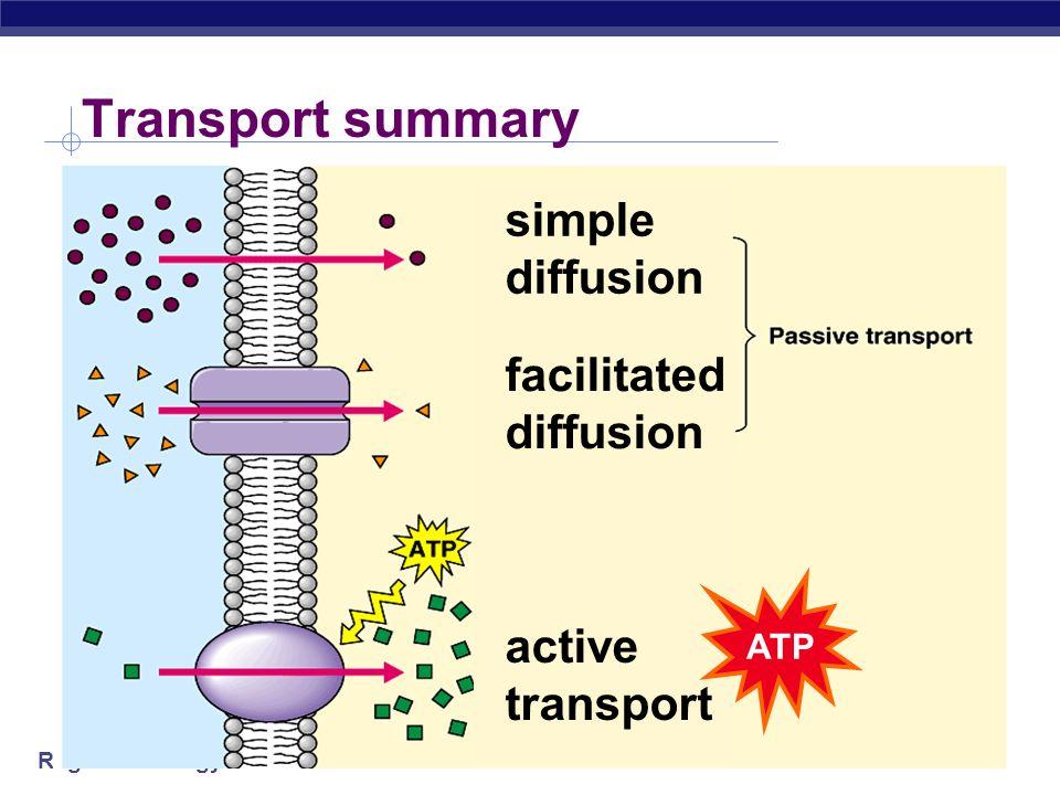 Transport summary simple diffusion facilitated diffusion
