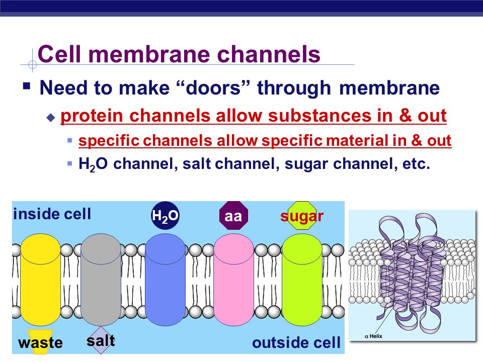 Cell membrane channels