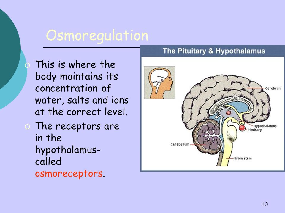 Osmoregulation This is where the body maintains its concentration of water, salts and ions at the correct level.