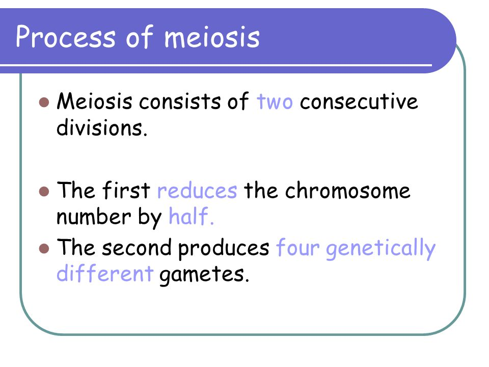 Process of meiosis Meiosis consists of two consecutive divisions.