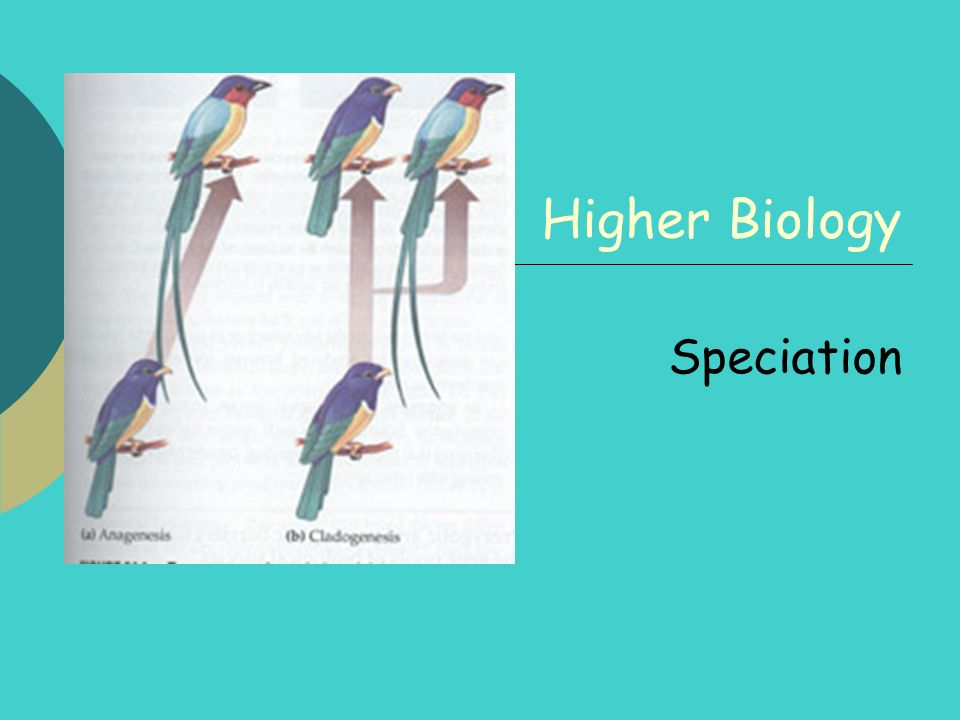 Higher Biology Speciation
