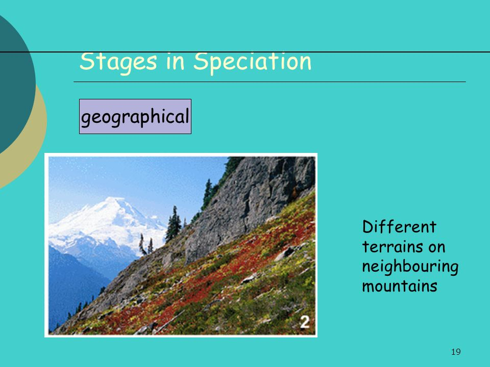 Stages in Speciation geographical