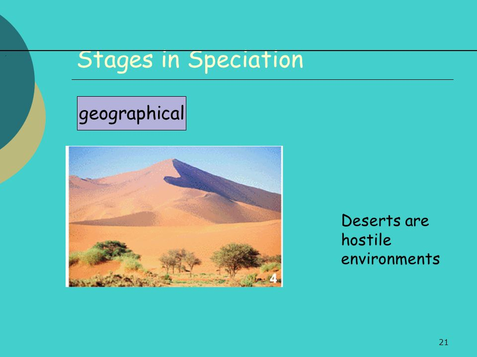Stages in Speciation . geographical Deserts are hostile environments