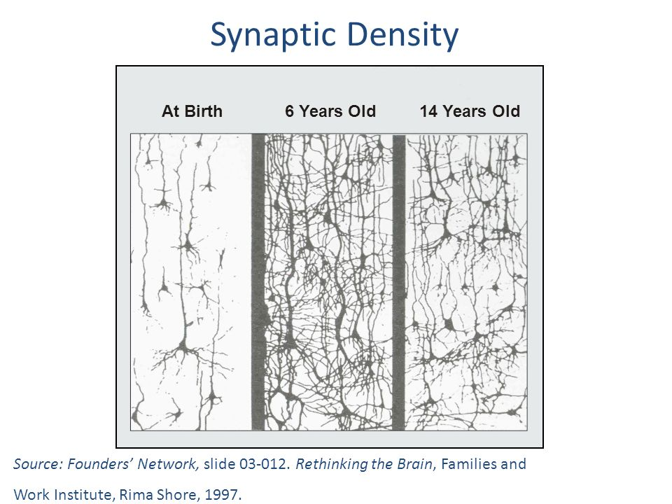Synaptic Density At Birth 6 Years Old 14 Years Old