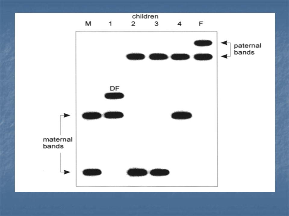 M = maternal bands, F = paternal bands