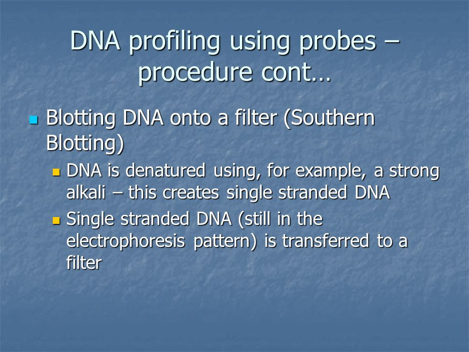DNA profiling using probes – procedure cont…