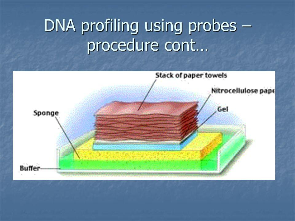 DNA profiling using probes – procedure cont…