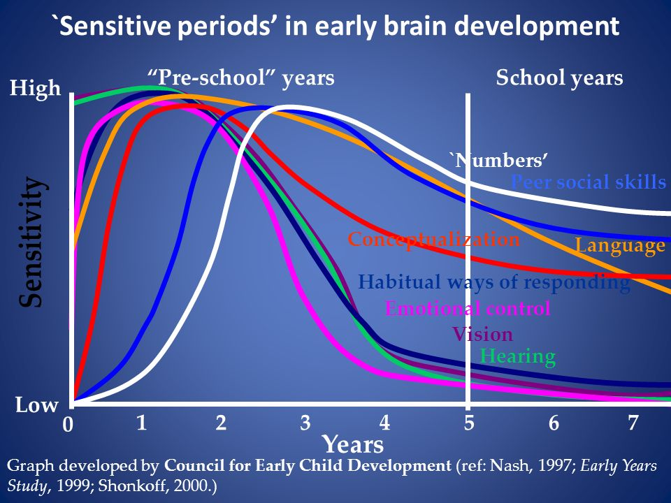 `Sensitive periods' in early brain development