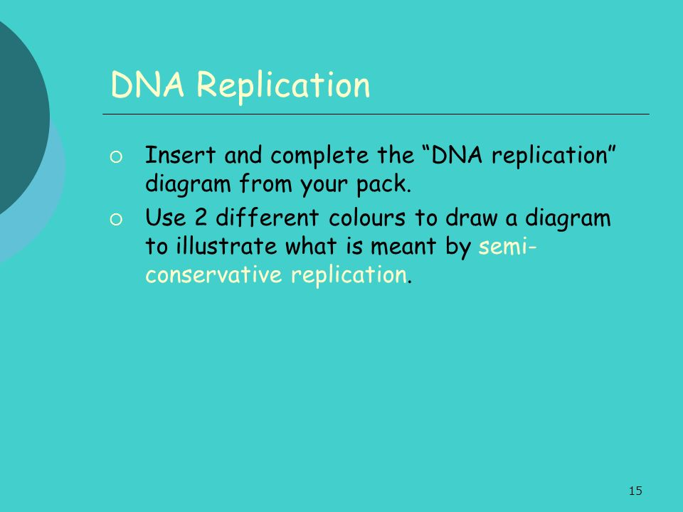 DNA Replication Insert and complete the DNA replication diagram from your pack.