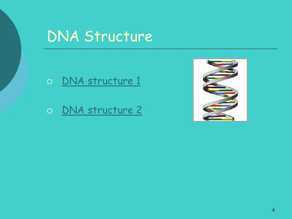 DNA Structure DNA structure 1 DNA structure 2