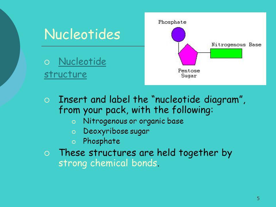 Nucleotides Nucleotide structure
