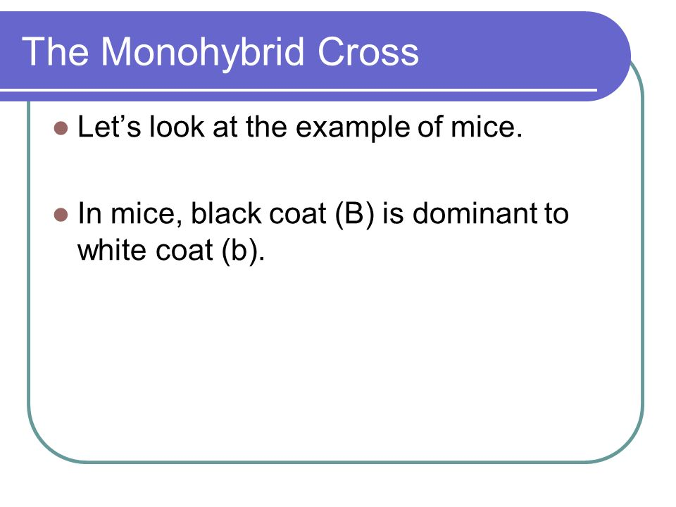 The Monohybrid Cross Let's look at the example of mice.