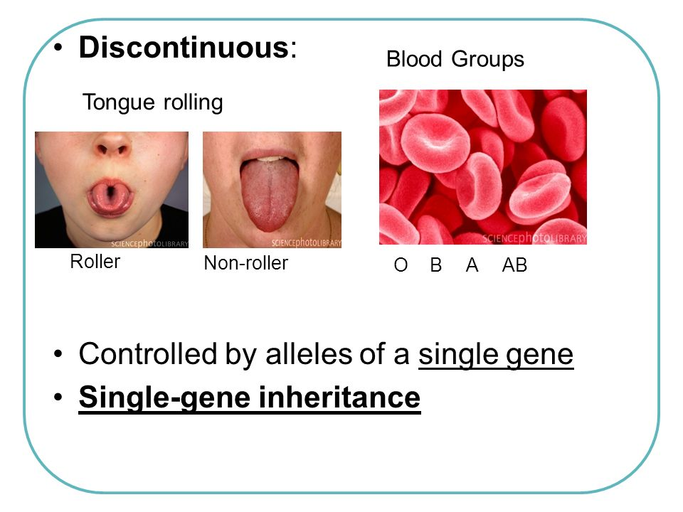Controlled by alleles of a single gene Single-gene inheritance