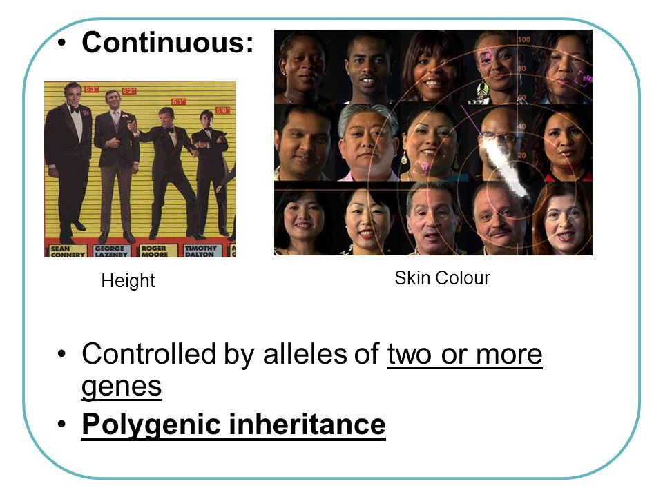 Controlled by alleles of two or more genes Polygenic inheritance