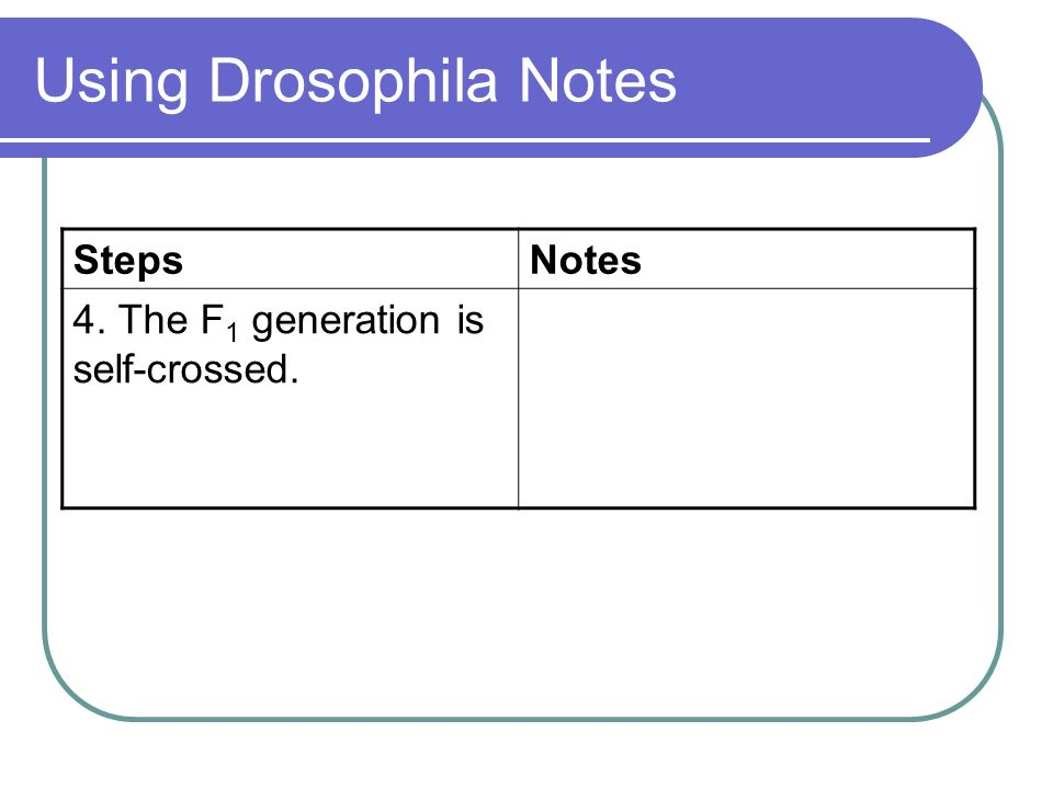 Using Drosophila Notes