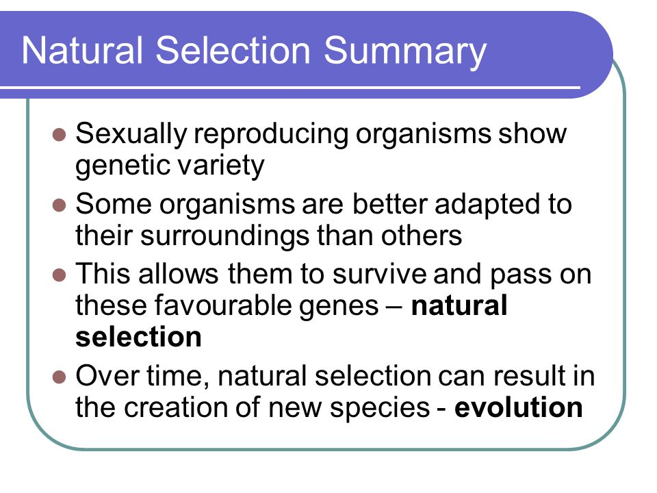 Natural Selection Summary