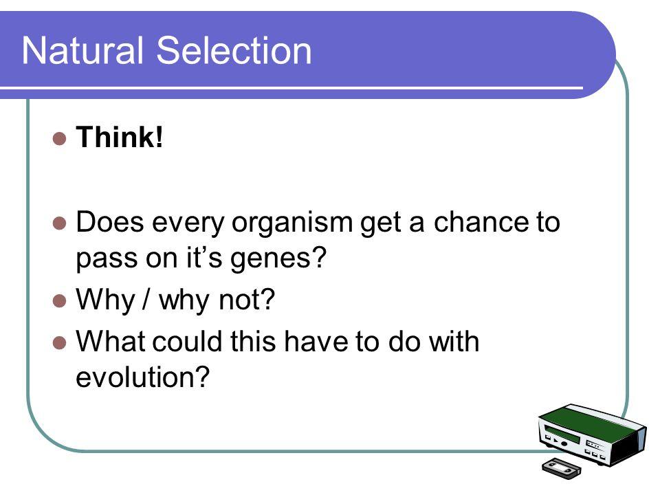 Natural Selection Think!