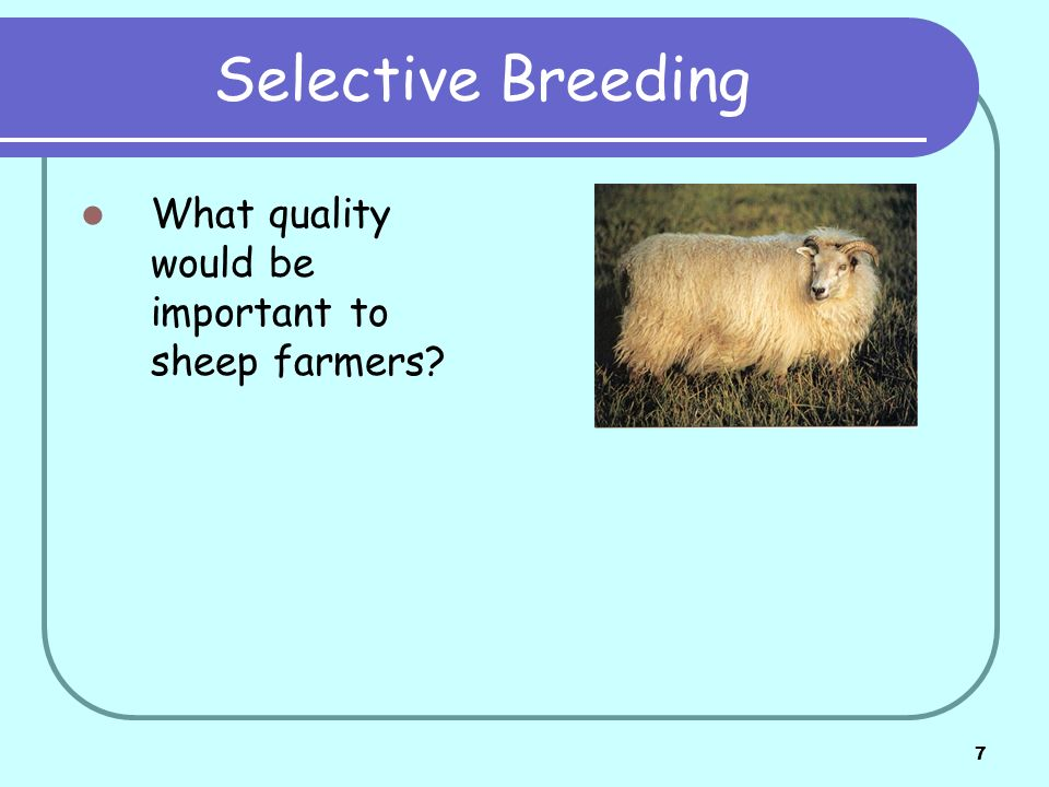 Selective Breeding What quality would be important to sheep farmers