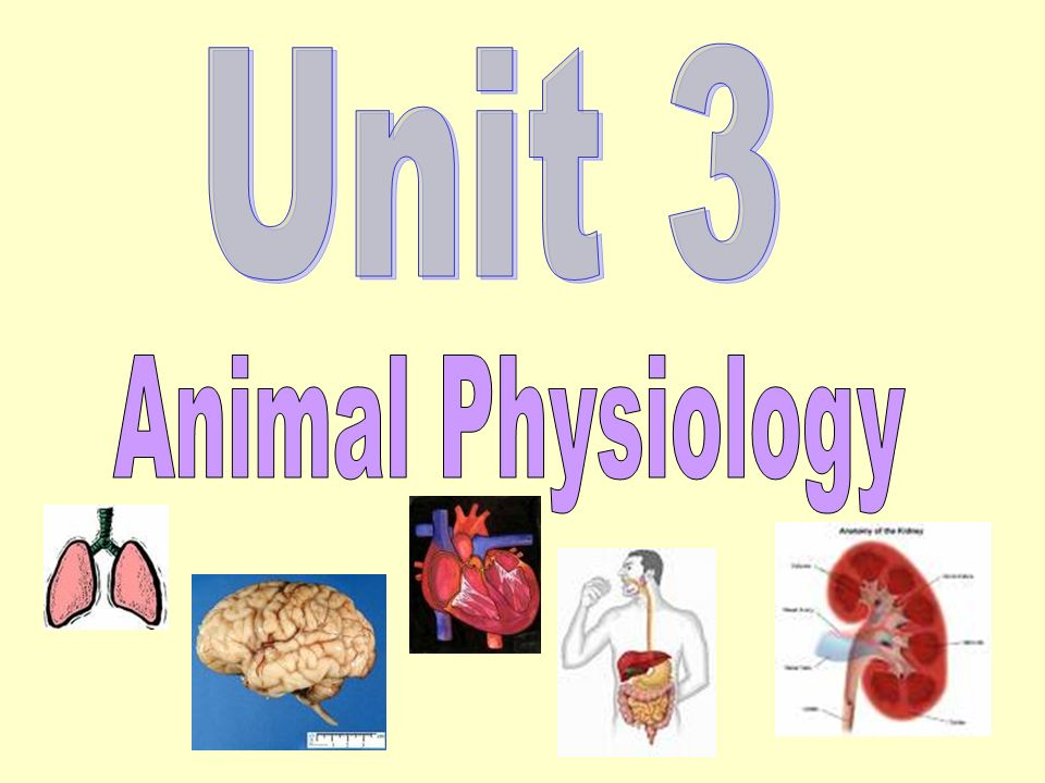 Unit 3 Animal Physiology
