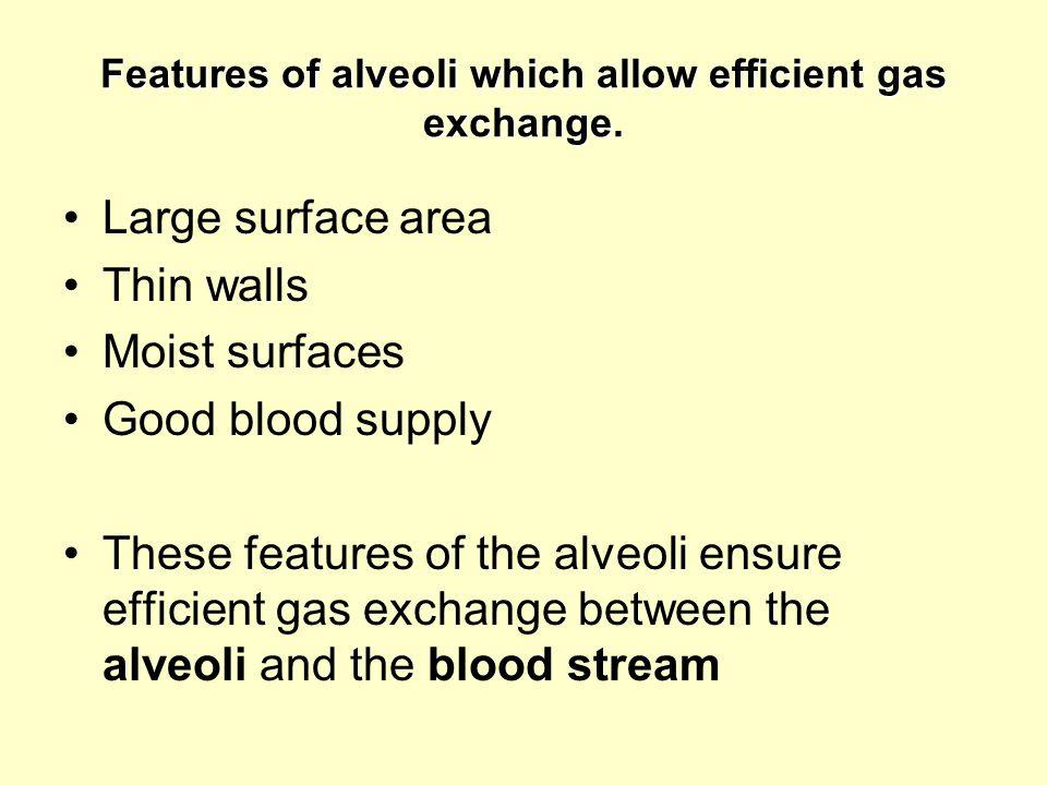 Features of alveoli which allow efficient gas exchange.