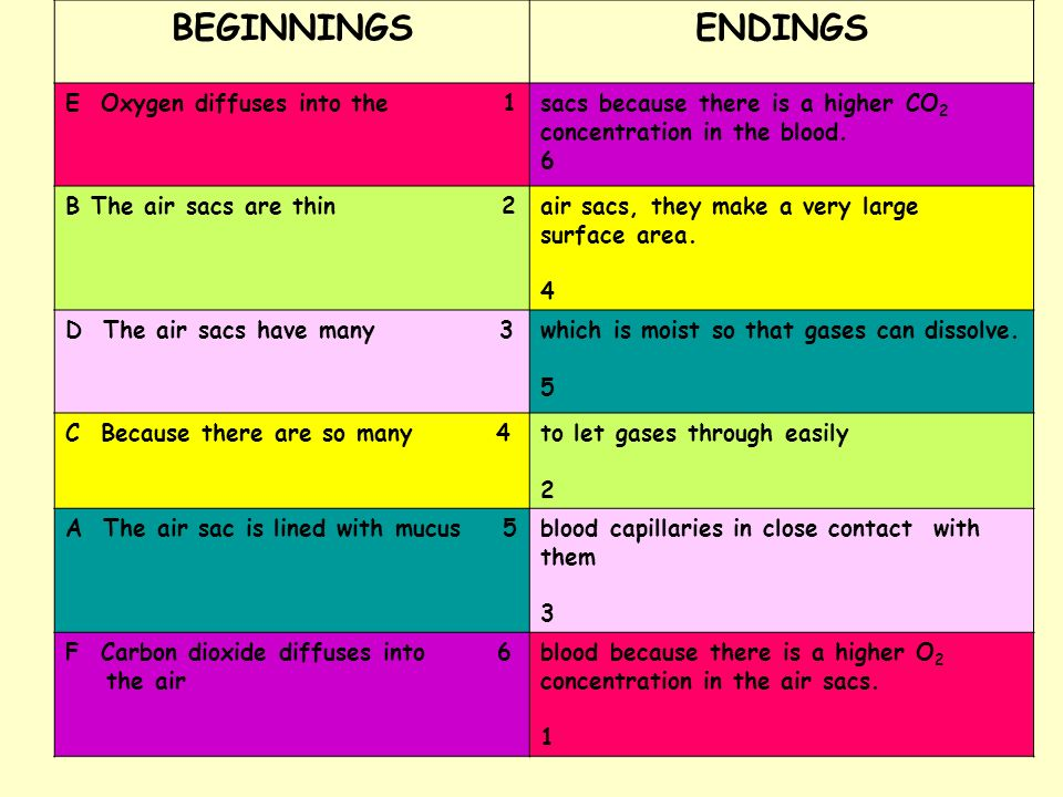 BEGINNINGS ENDINGS E Oxygen diffuses into the 1