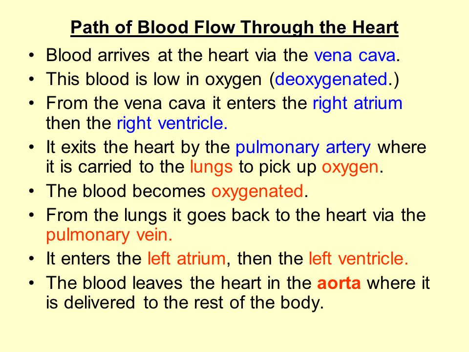 Path of Blood Flow Through the Heart