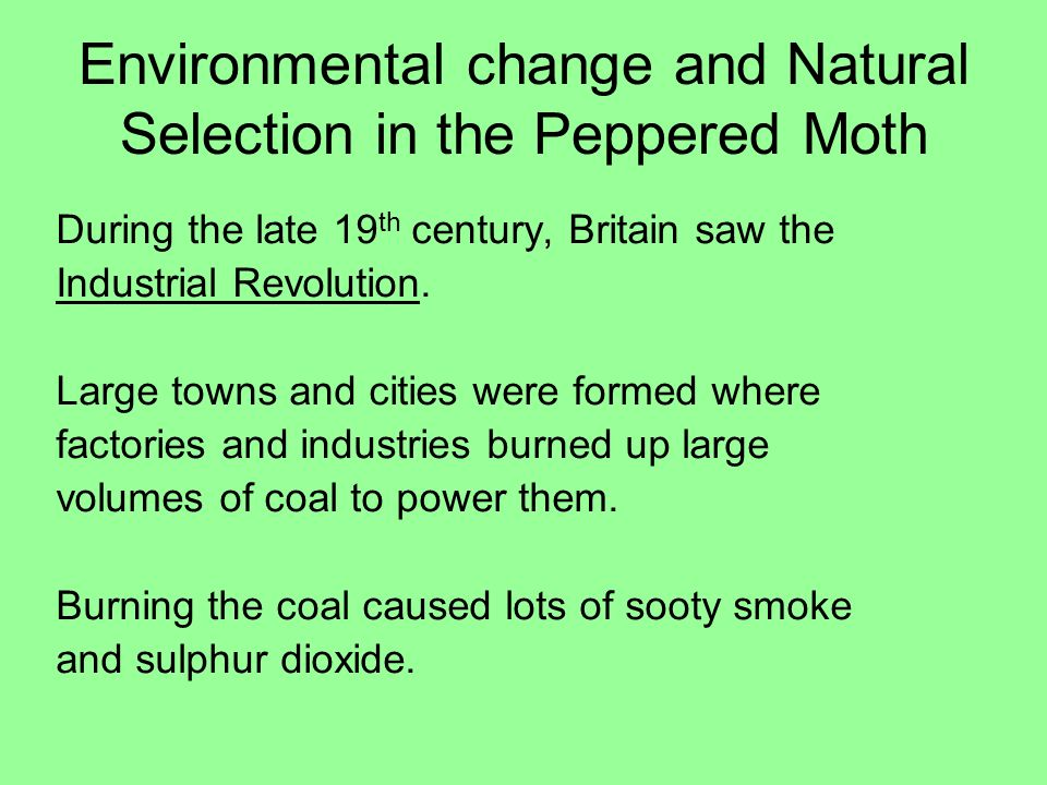 Environmental change and Natural Selection in the Peppered Moth