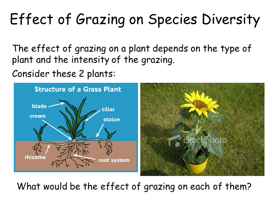 Effect of Grazing on Species Diversity