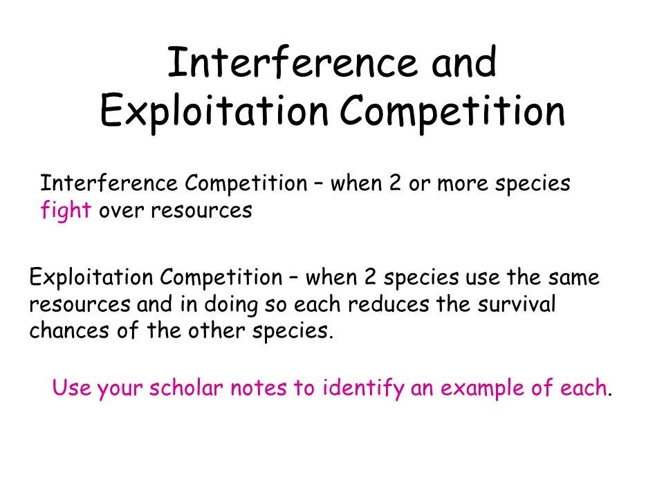 Interference and Exploitation Competition