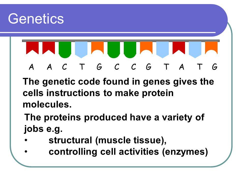 Genetics A A C T G C C G T A T G.