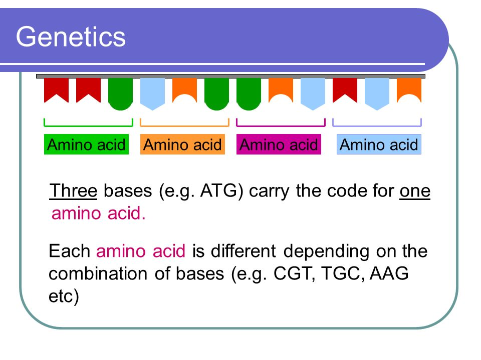 Genetics Three bases (e.g. ATG) carry the code for one amino acid.