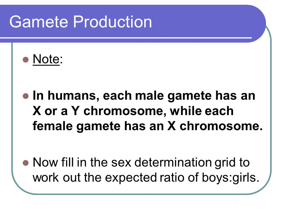 Gamete Production Note: