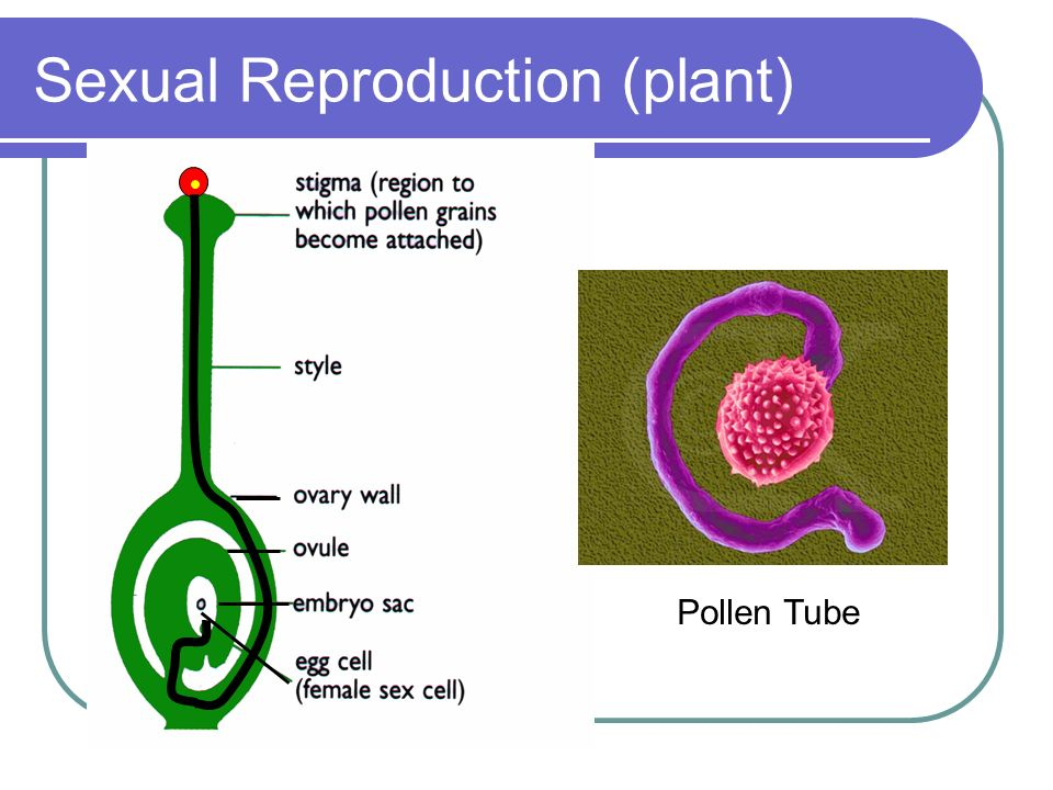 Sexual Reproduction (plant)
