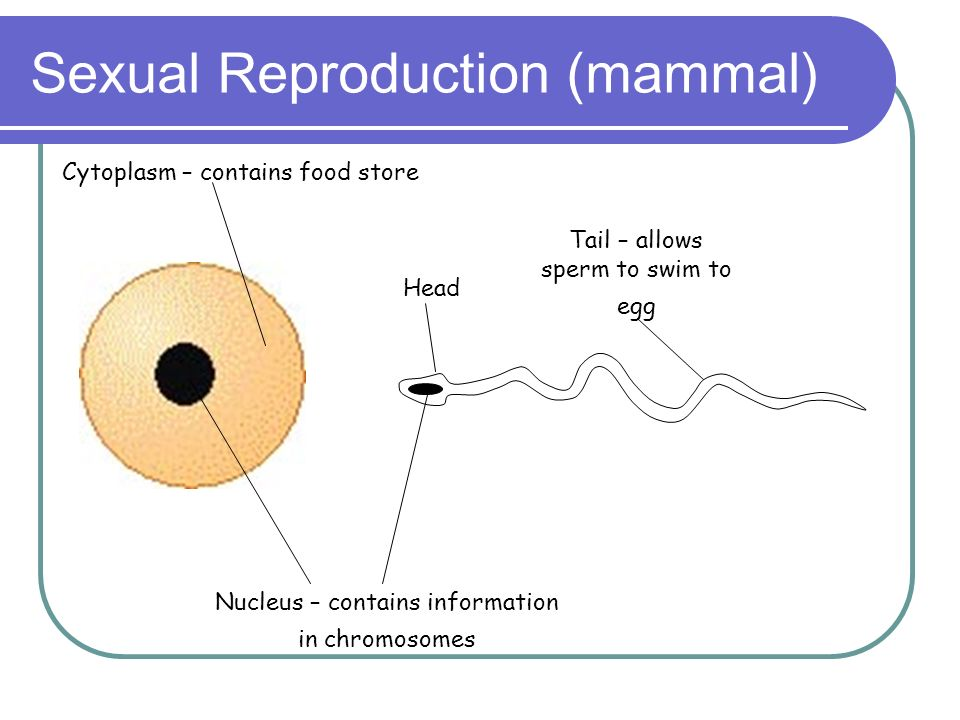 Sexual Reproduction (mammal)