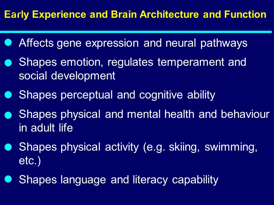 Early Experience and Brain Architecture and Function