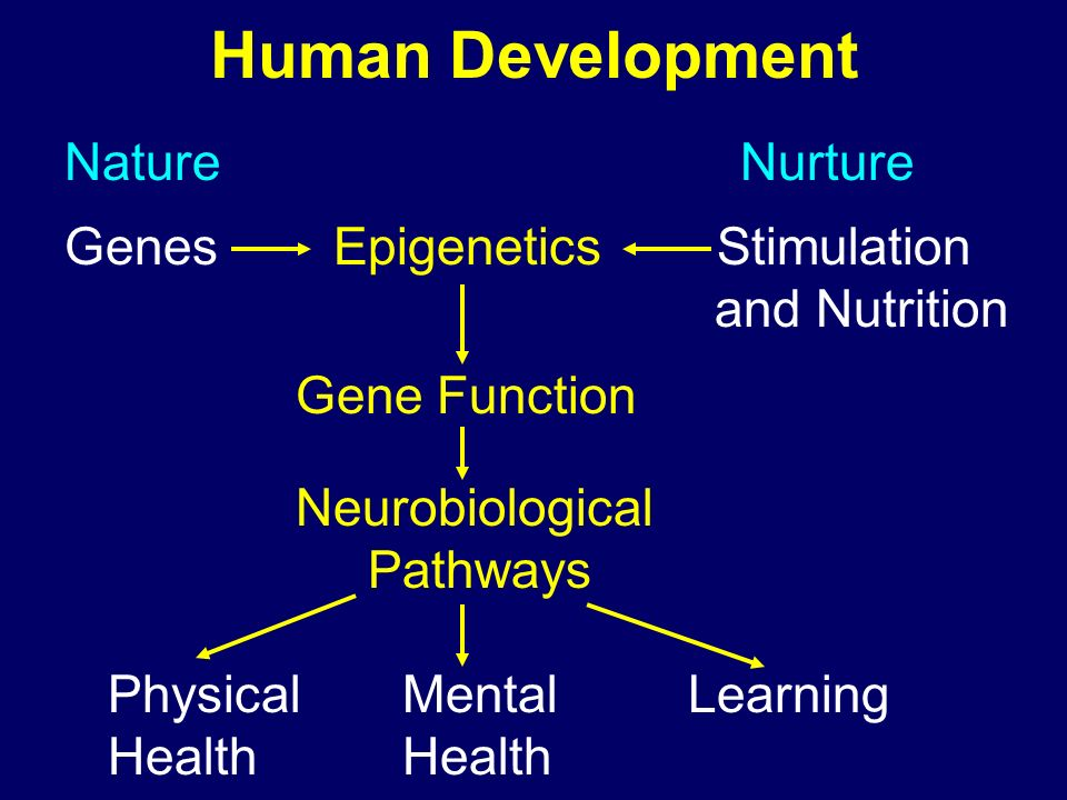 Human Development Nature Nurture Genes Epigenetics Stimulation