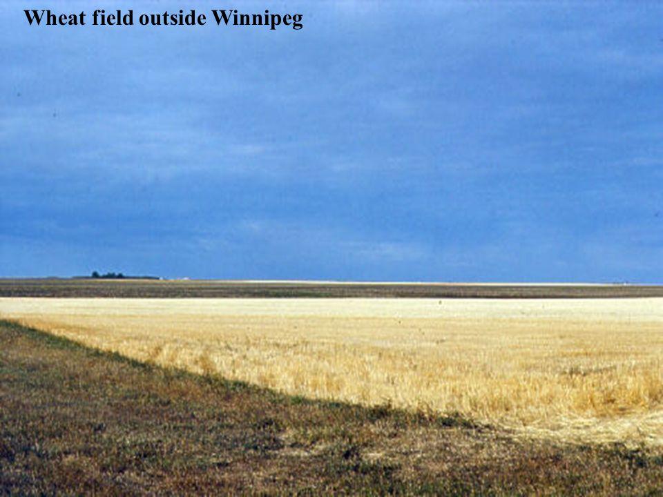 Wheat field outside Winnipeg