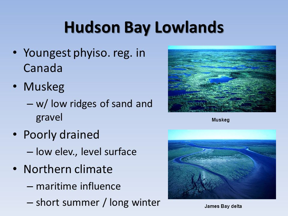 Hudson Bay Lowlands Youngest phyiso. reg. in Canada Muskeg
