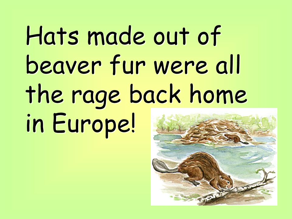 Hats made out of beaver fur were all the rage back home in Europe!