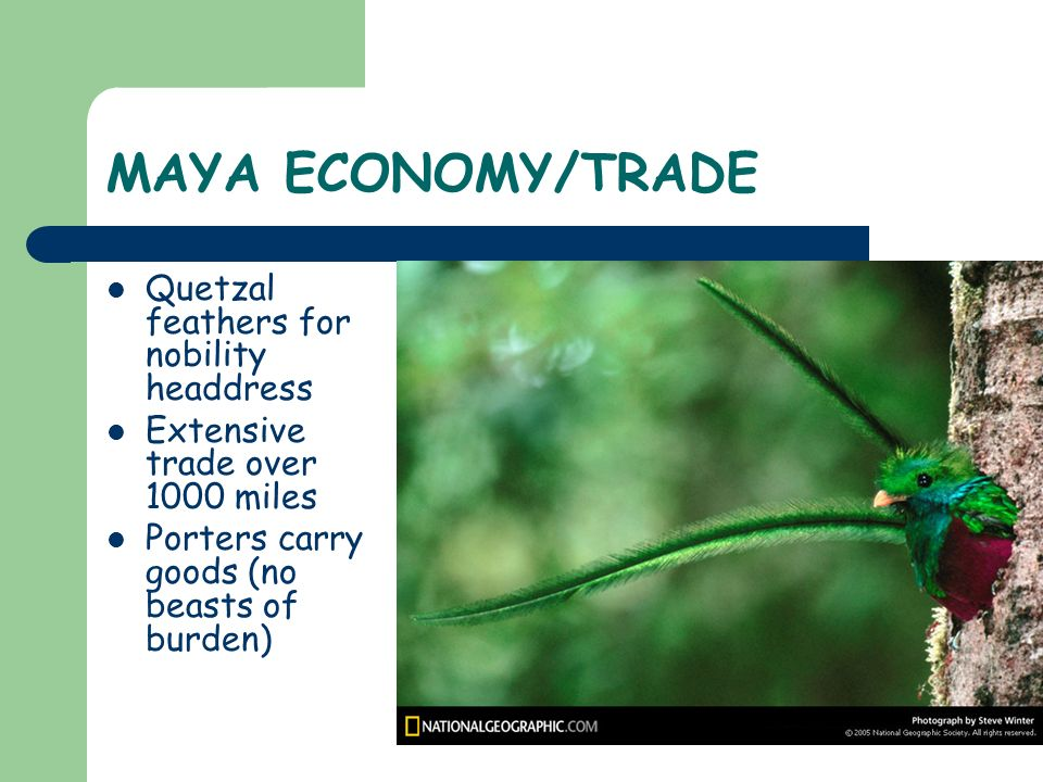 MAYA ECONOMY/TRADE Quetzal feathers for nobility headdress