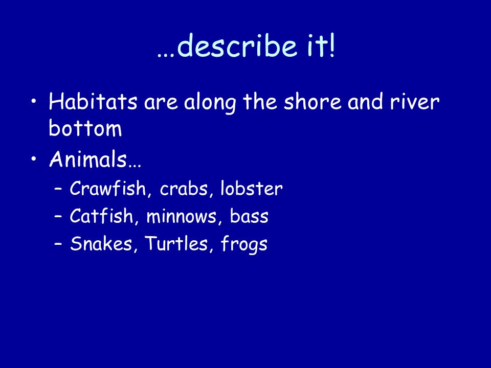 …describe it! Habitats are along the shore and river bottom Animals…