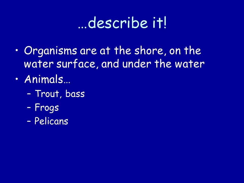 …describe it! Organisms are at the shore, on the water surface, and under the water. Animals… Trout, bass.