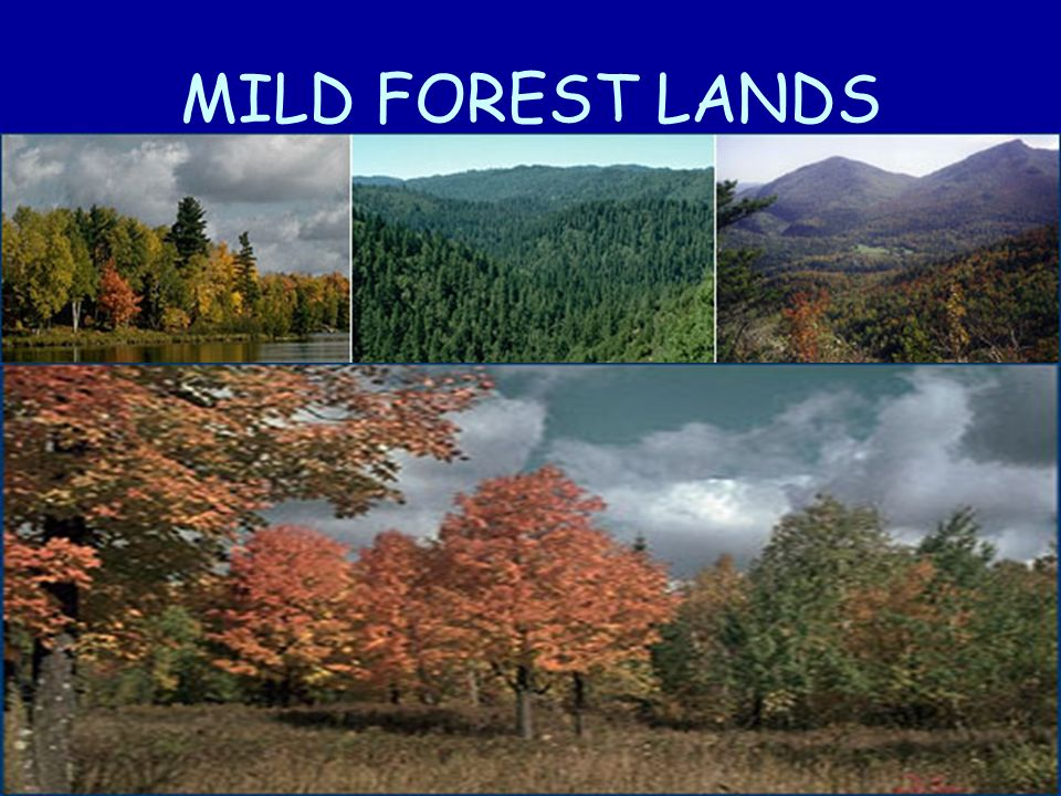 MILD FOREST LANDS
