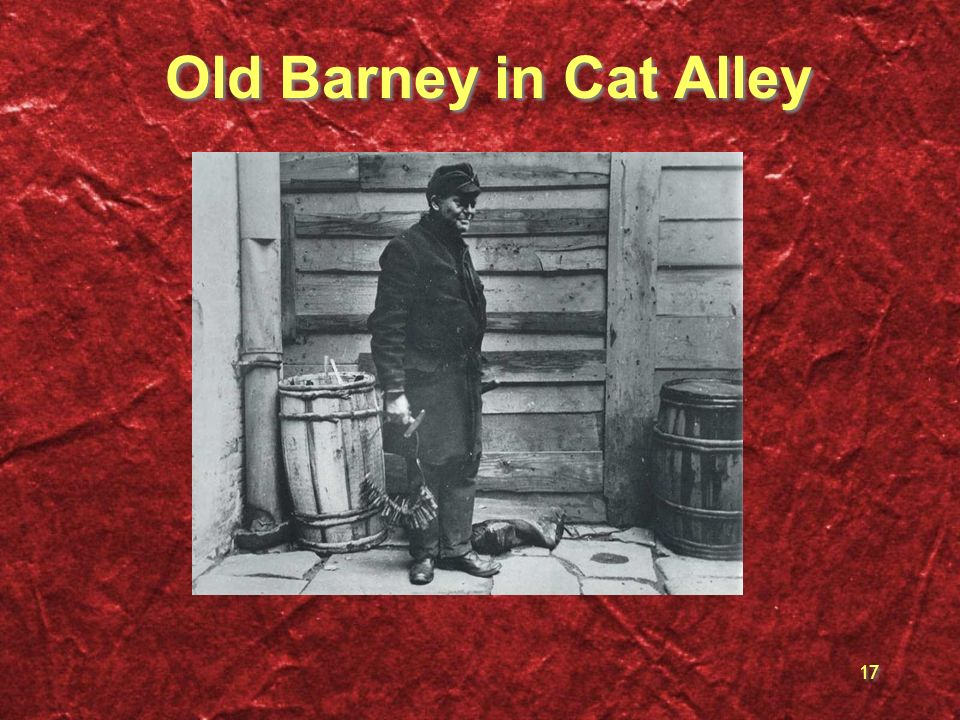 Old Barney in Cat Alley
