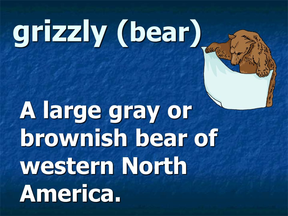 A large gray or brownish bear of western North America.