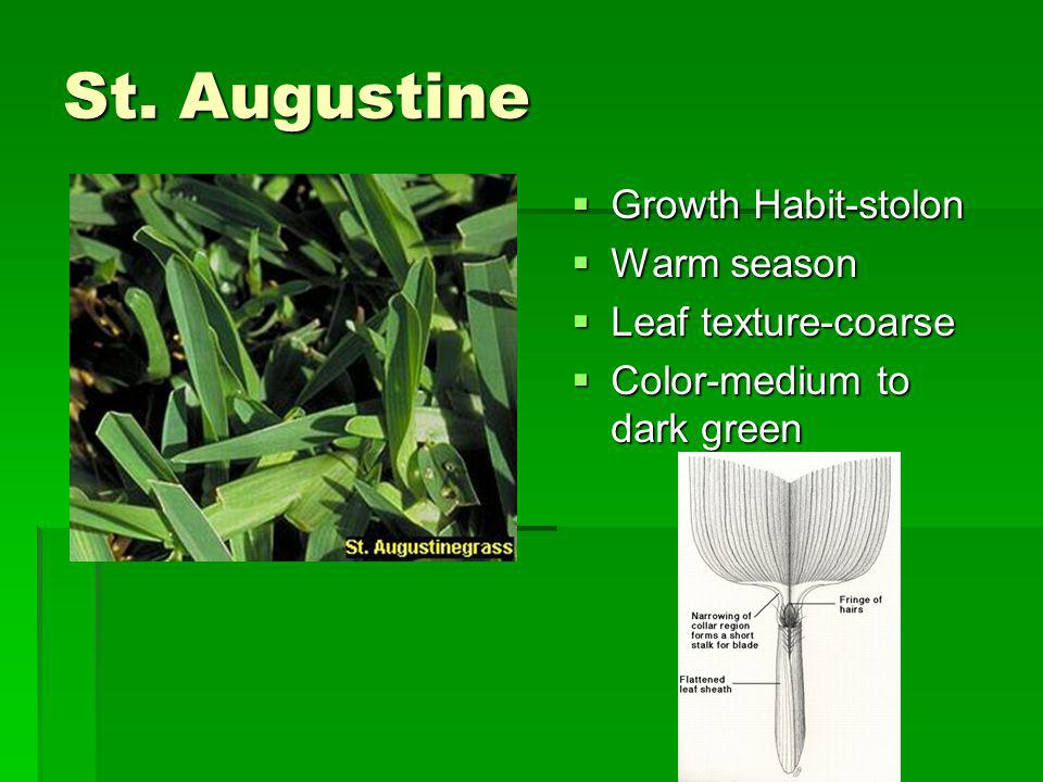 St. Augustine Growth Habit-stolon Warm season Leaf texture-coarse