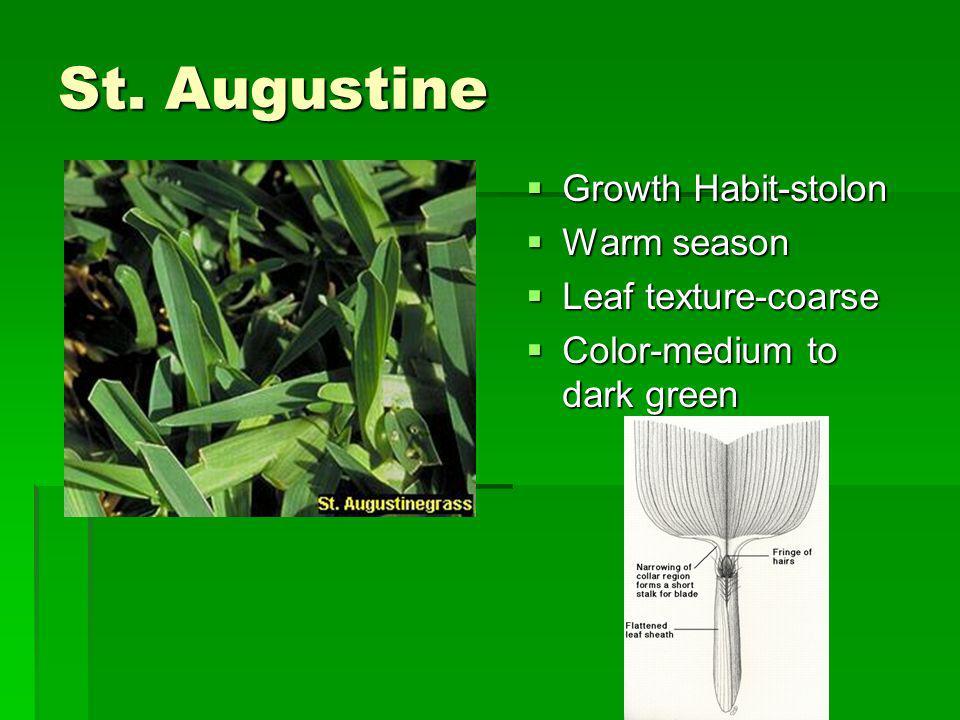 St. Augustine Growth Habit-stolon Warm season Leaf texture-coarse