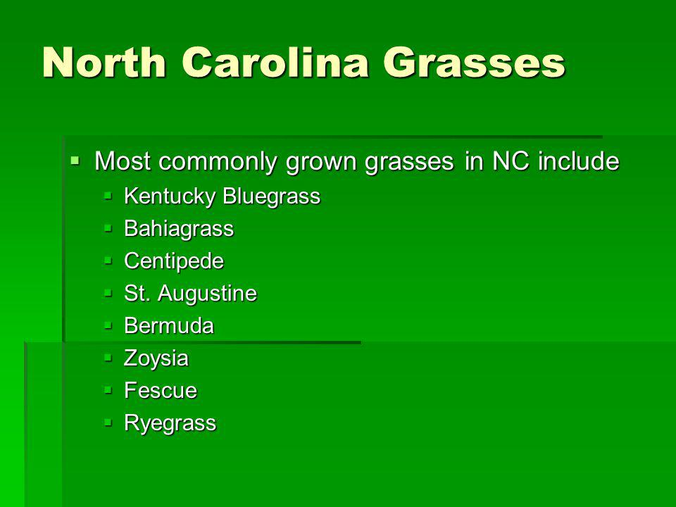 North Carolina Grasses