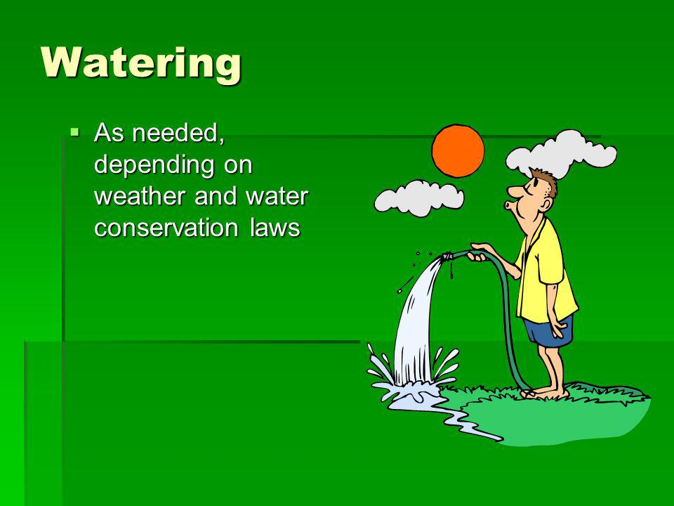 Watering As needed, depending on weather and water conservation laws